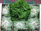 Salat Trocadero