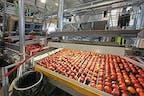 Die Firma Gullino produziert Obst
