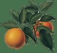 Logo von Meine Orangerie Vertriebs GmbH