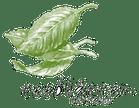 Logo von Teeblätter-Versand