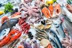 Fische und Garnelen (TK Ware)