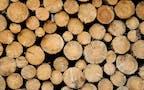 Holz für unsere Holzbrennstoffe