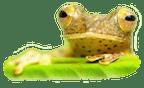 Logo von Die Teichreiniger - Inhaber: Daniel Hoefler
