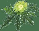 Logo von N. U. Agrar GmbH